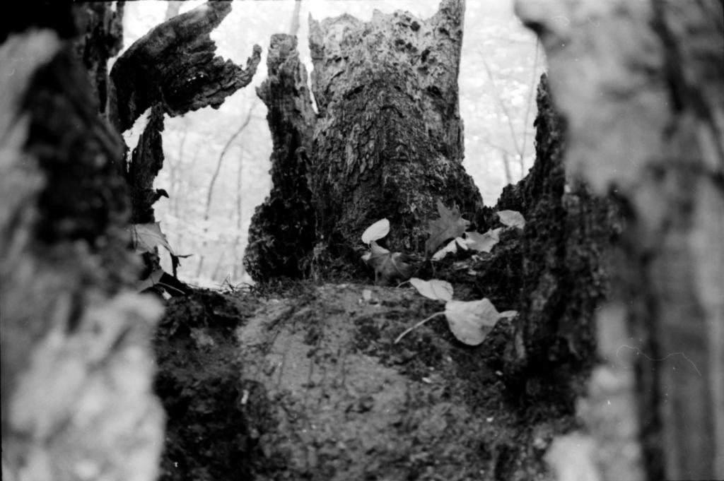 inside-tree